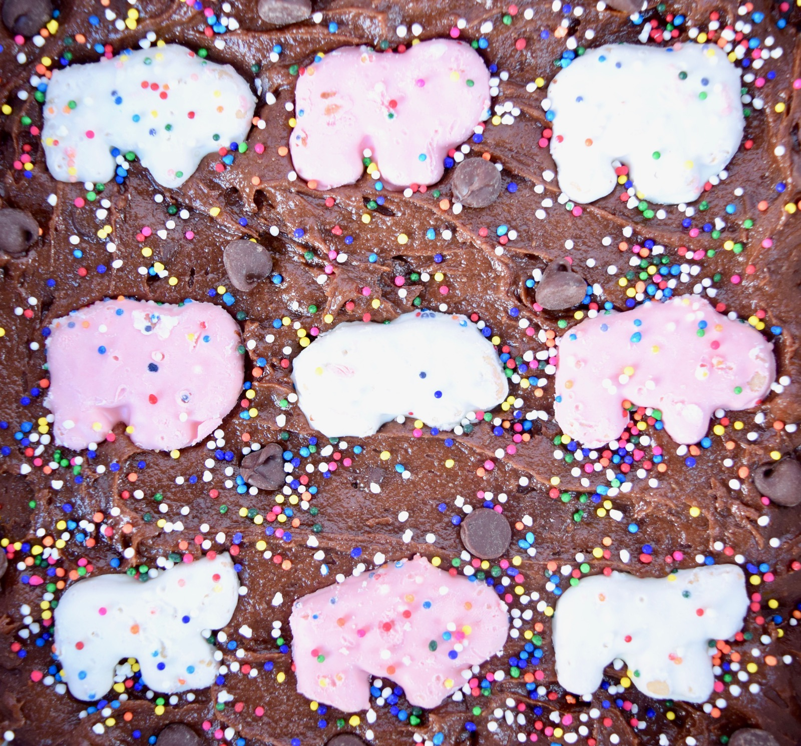 1 Step Circus Cookies Brownies Recipe
