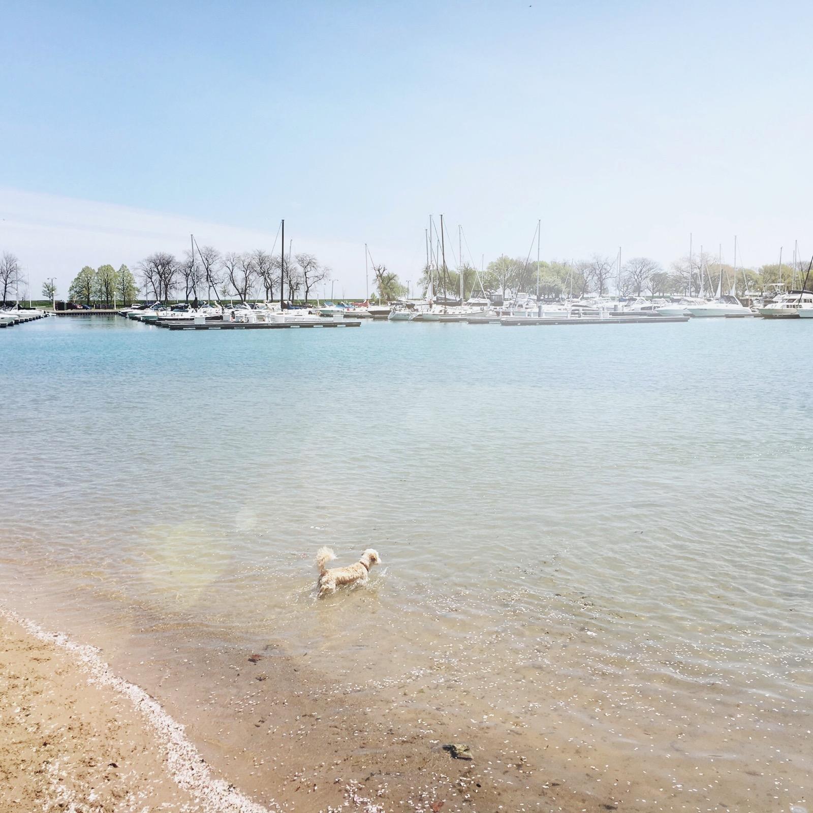Montrose Dog Beach Chicago