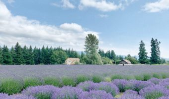 Lavender Valley Portland